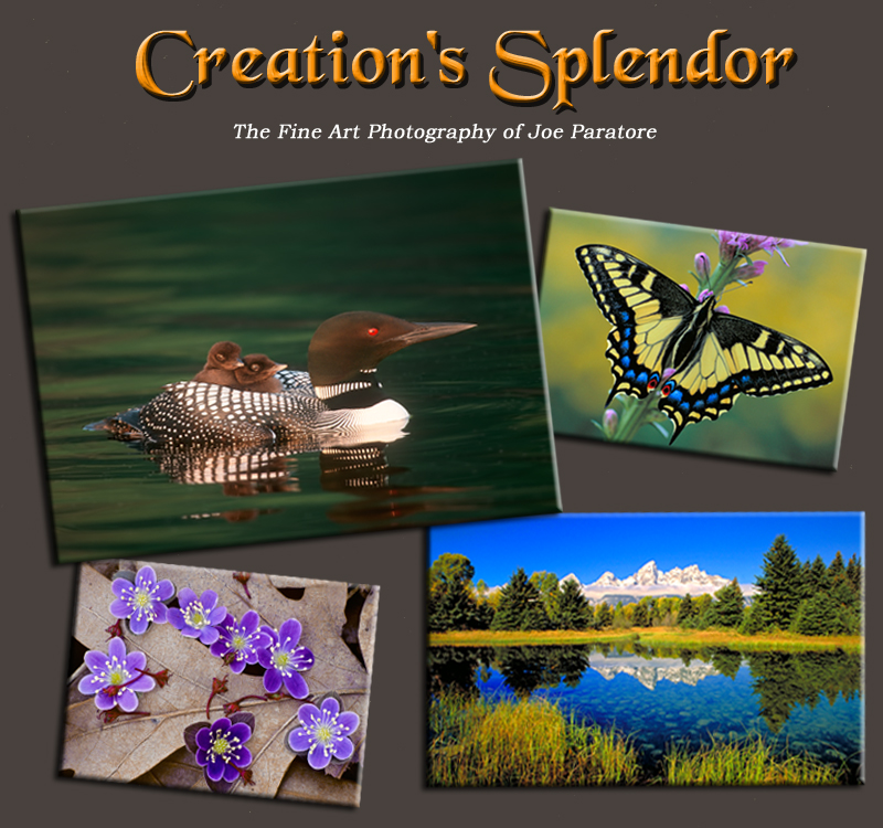 Enter Creation's Splendor Web